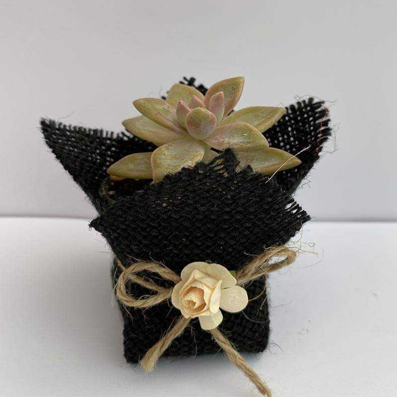 Siyah Renkli Jut Kumaş Süslemeli Çiçek Aksesuarlı Sukulent