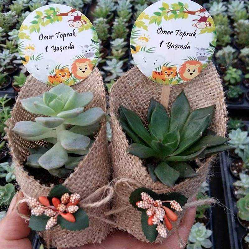 Natural Jut Kumaş Süslemeli Çiçek Aksesuarlı Sukulent