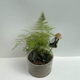 Cam Saksı İçerisinde Kuş Konmaz Bitkili Sukulent Aranjman